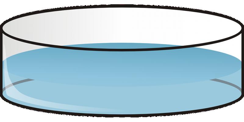 petri-28971_960_720.png
