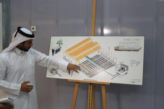 Hydroponics in Qatar - The Water Network | by AquaSPE